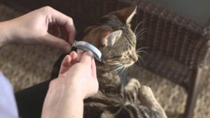 collier anti-puce chat