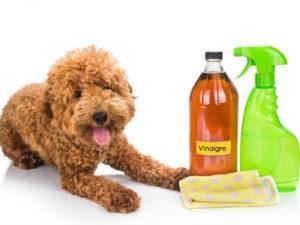 brossage naturel anti-puces chien et chat