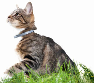 collier anti-puce efficace pour chat