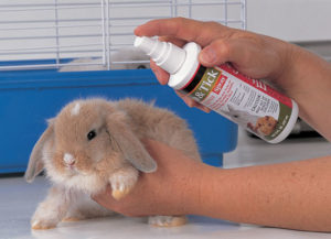 solution naturelle anti-puce lapin